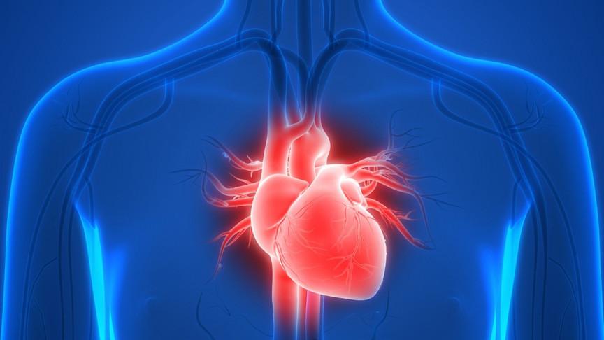 Ľudské srdce.